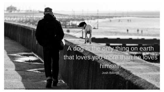 Dog Walkers Edenvale. A dog is the only thing on earth that loves you more than he loves himself.