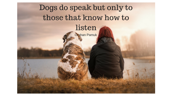 Dog walking team - quote