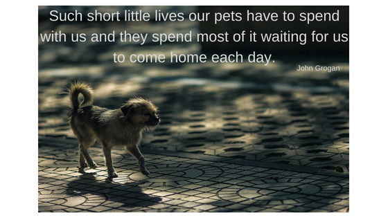 Dog Walkers Edenvale. Such short little lives our pets have to spend with us and they spend most of it waiting for us to come home each day.