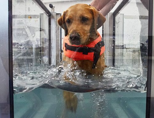 Hydrotherapy for Dogs: What Is It and What Are the Benefits?