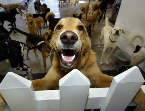 What's in a Doggy-Daycare